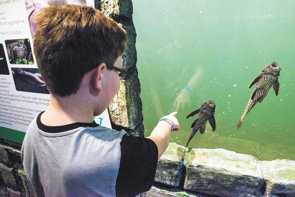 Riley takes a gander at some of the fish at the Blue Zoo interactive aquarium. - DANIEL WALTERS PHOTO