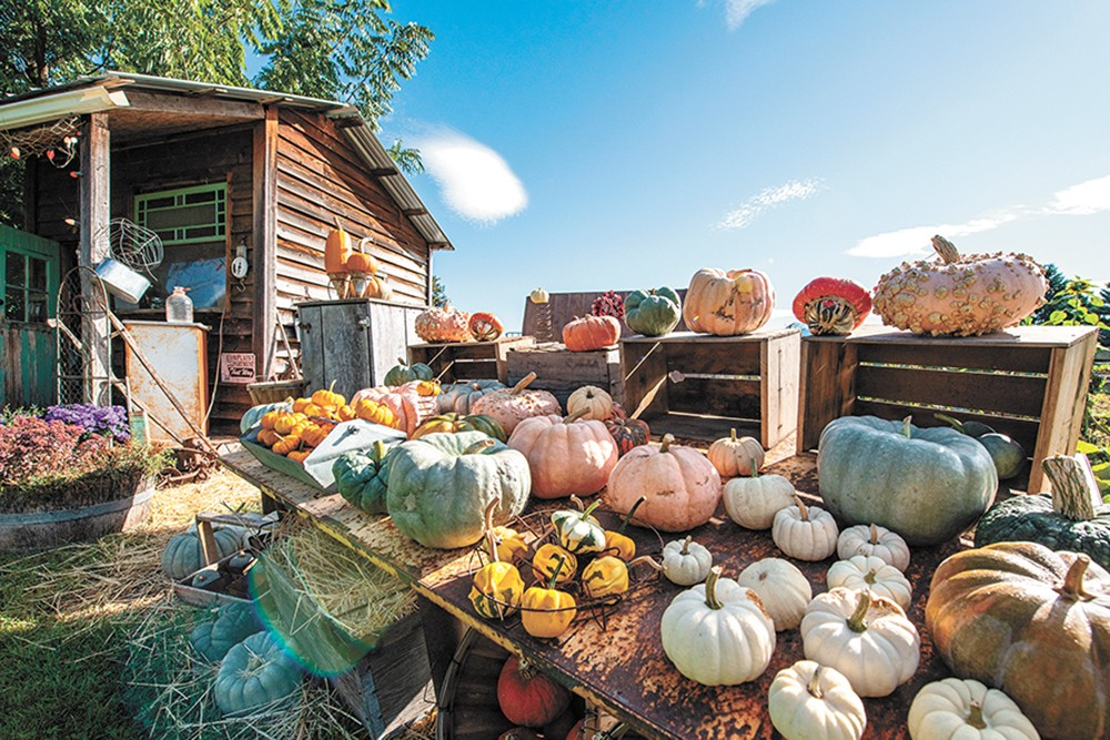 The farm opens to the public twice a week through October. - ERICK DOXEY PHOTO