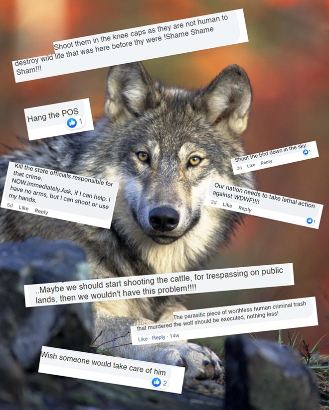 Violent comments on environmental Facebook groups have worried the Washington Department of Fish and Wildlife. - GARY KRAMER/USFWS PHOTO, COLLAGE BY DANIEL WALTERS