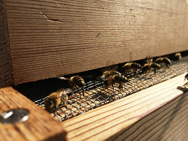 The bees are bummin' - ELIZABETH HIGGINS PHOTO