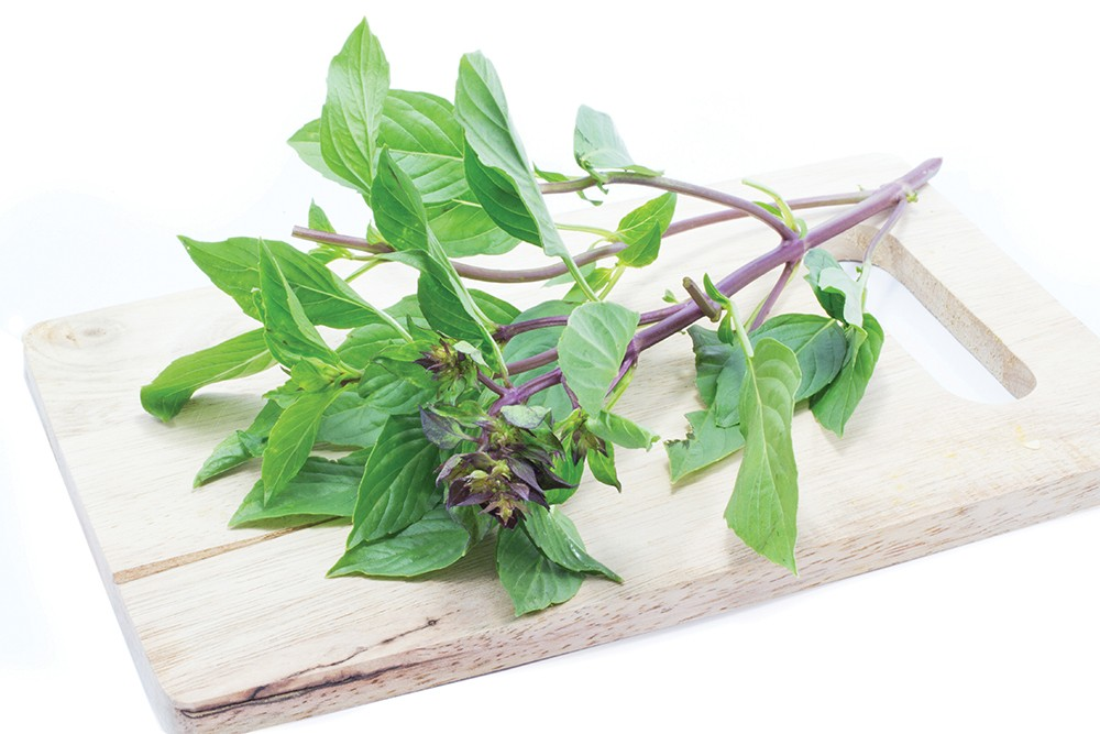 Thai basil, with its squared purple stems, is notable for the distinct aroma of anise if you brush the leaves.