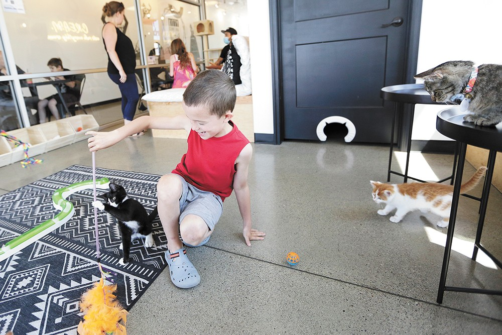 Gunner Yake, 7, plays with Henry at Spokane's Kitty Cantina. - YOUNG KWAK PHOTO
