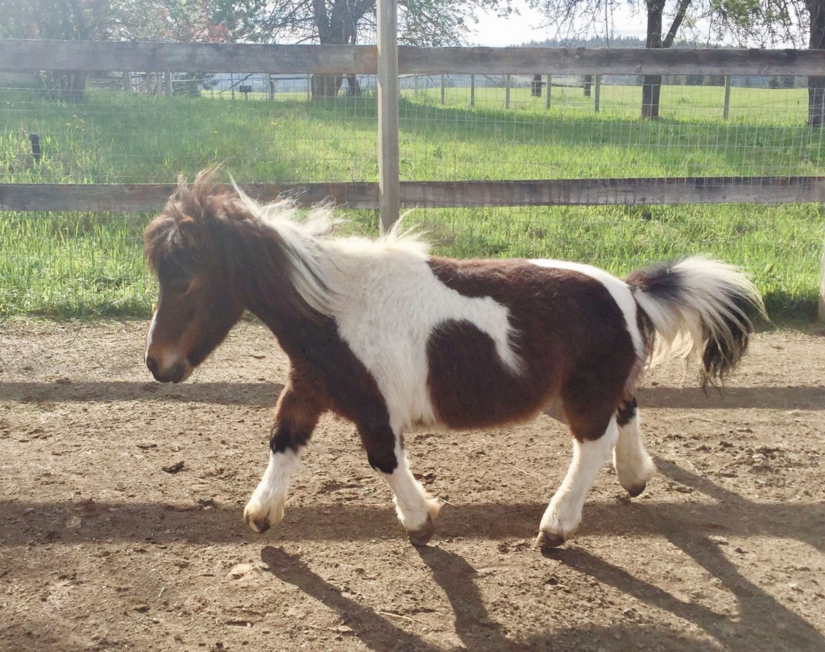 S'Mores the mini horse is one of more than 120 animals at the local sanctuary.