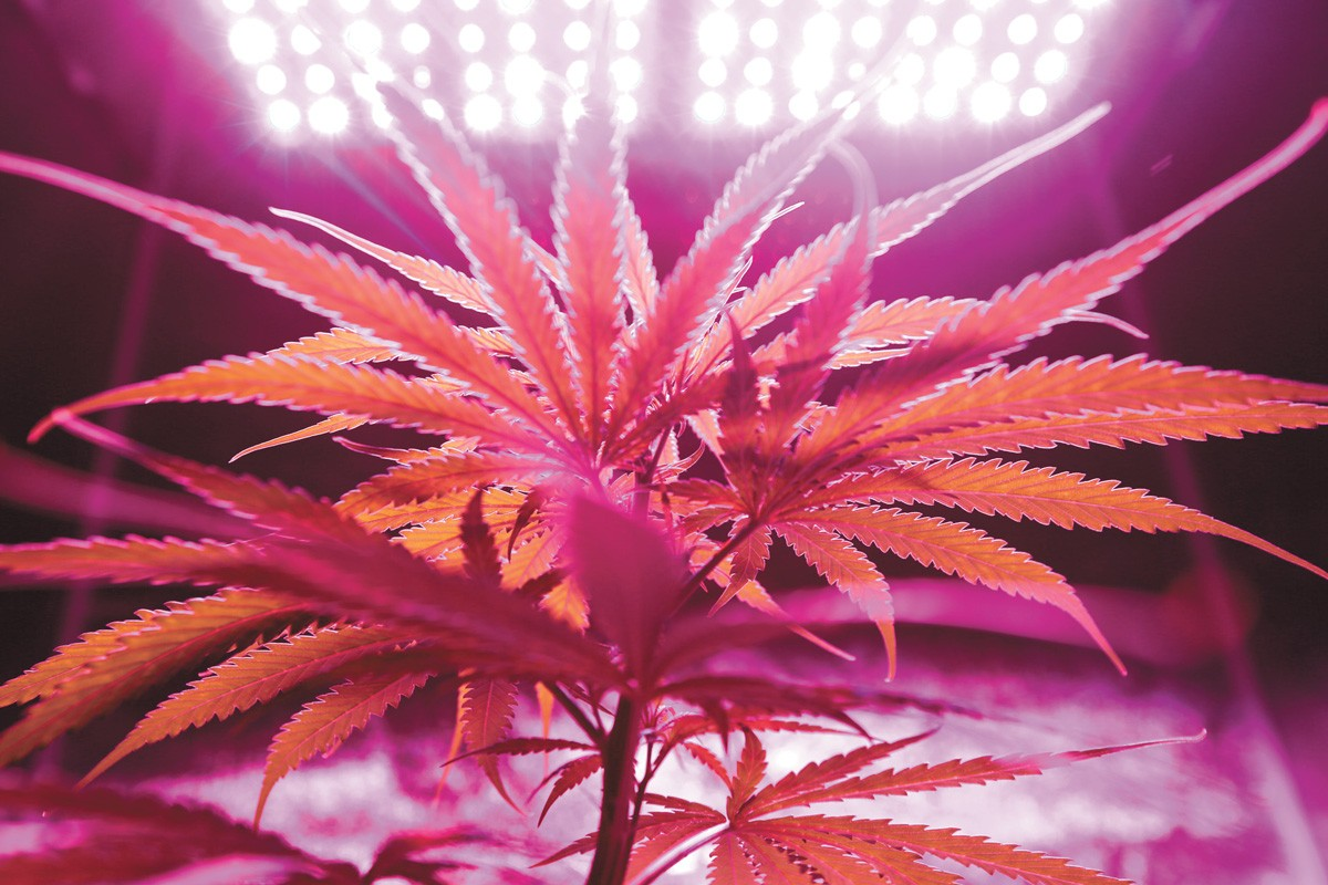 It's sort of a good news/bad news situation in recent cannabis studies.