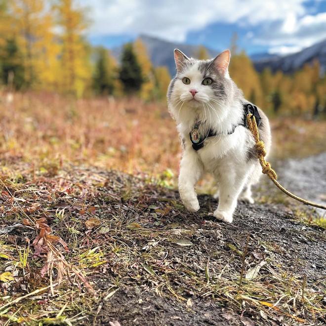 Gary the Cat (@greatgramsofgary)