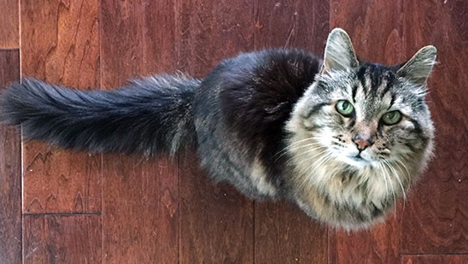 Corduroy reclaimed the title of Oldest Living Cat at age 26. - GUINNESS WORLD RECORDS