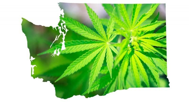marijuana-wa-1200xx2516-1415-92-0-800x449.jpg