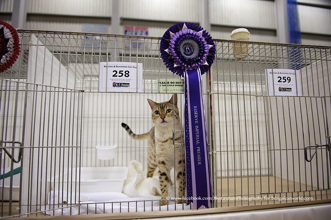 There's obviously going to be lots of cute cats at next weekend's On Safari show.