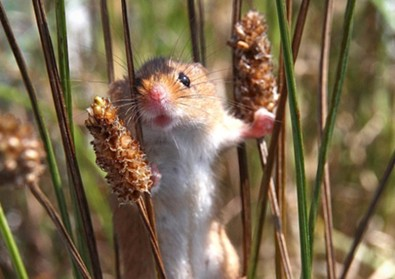 Sure, no one wants to see this cute little mouse get eaten, but how else will the predators survive?