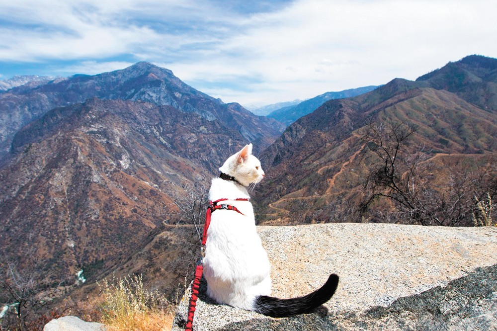 Not all cats are homebound. Some long for adventure.