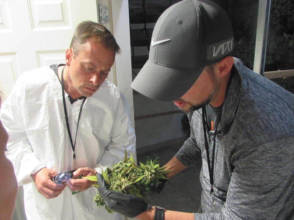 Valley Councilman Caleb Collier (left) gets a crash course in pot production last year, courtesy of Grow Op Farms owner Rob McKinley. - WILSON CRISCIONE