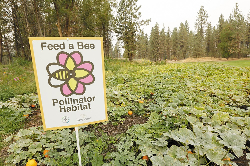 The Down River golf course has become home to bees looking for a good meal. - YOUNG KWAK