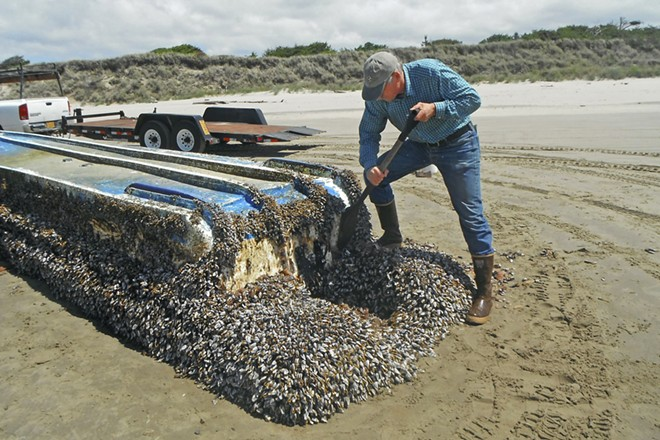 In an undated handout photo, John Chapman inspects a derelict vessel from Japan that washed ashore on Long Beach, Wash. Hundreds of species — mussels, crabs and others — traveled thousands of miles on debris to American shores after the 2011 tsunami in Japan. - RUSS LEWIS VIA THE NEW YORK TIMES