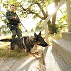 Police K9s, like the Spokane sheriff's Gunnar, are experts at finding suspects who don't want to be found