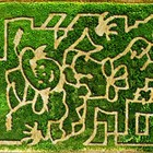 Beck's Harvest House Maze & Pumpkin Patch
