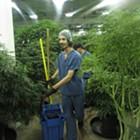 Spokane Valley caps pot retailers at three, lifts moratorium on growers
