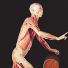 Bodies Human: Anatomy in Motion