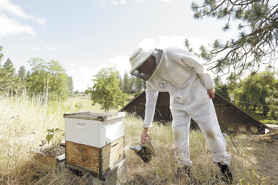 Rob McFarland tends to his bees in Medical Lake. - YOUNG KWAK