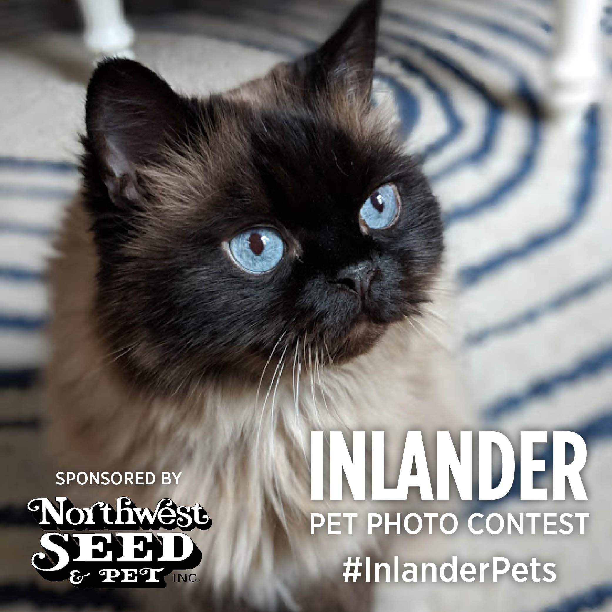 dbf85d01a8 There s one day left to submit to the Inlander s first-ever Pets ...