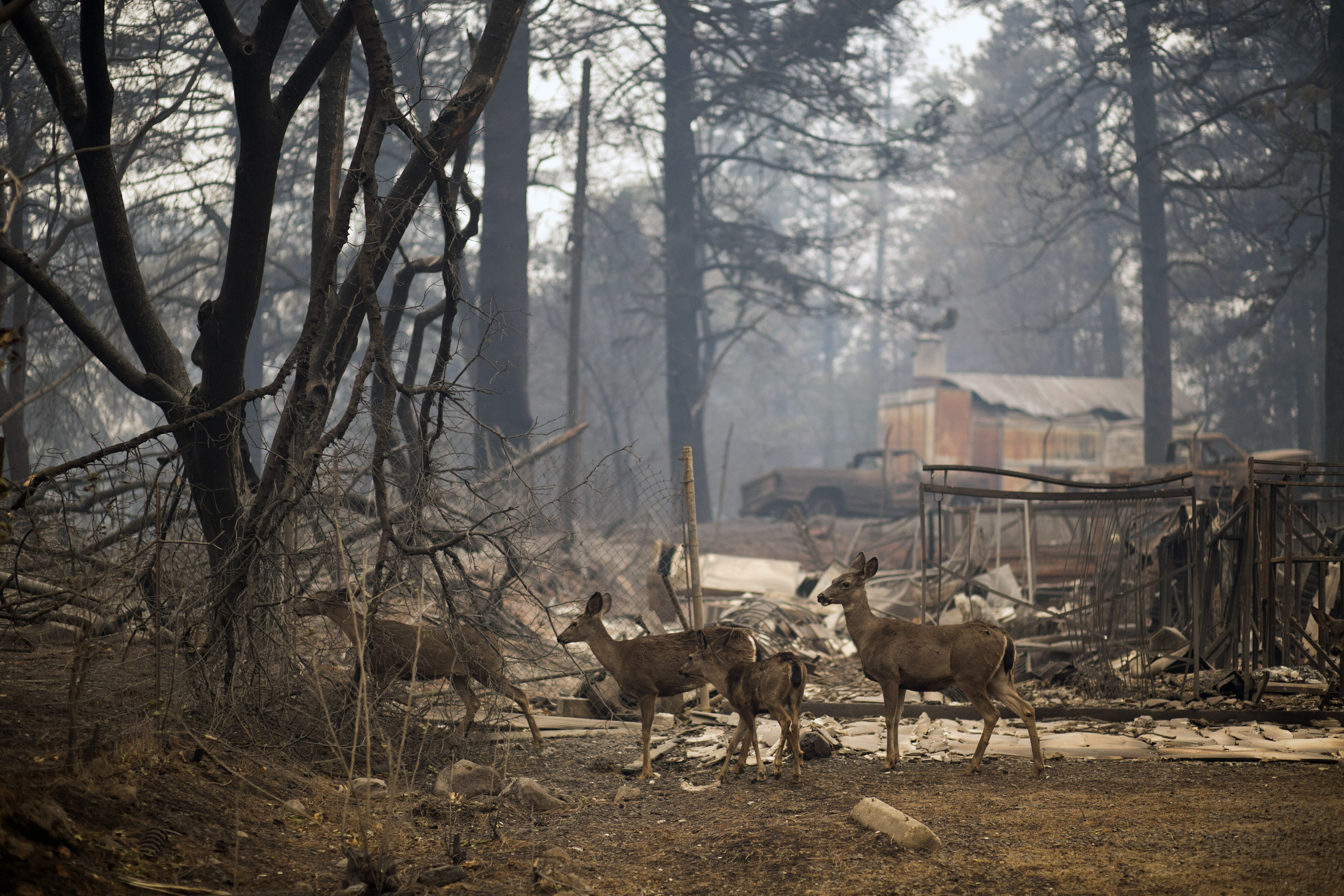 As wildfires get worse, insurers pull back from riskiest areas