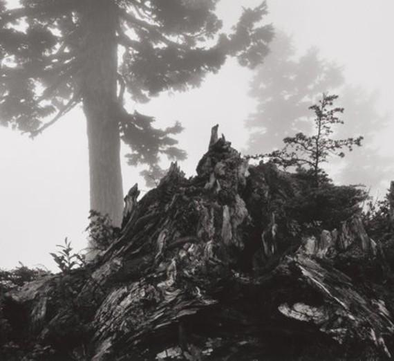 tree-stump-mist.jpg
