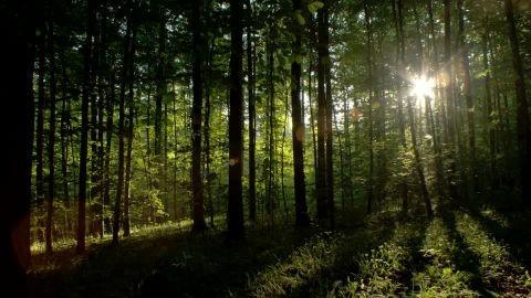 547853660-underbrush-oak-mixed-forest-sun-reflection.jpg