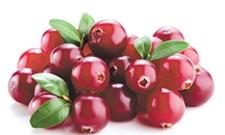 Cranberry Creativity