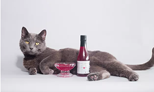 CAT FRIDAY: Our exclusive guide to gifts for the cats and cat people you know