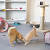 CAT FRIDAY: Play with cats online at the Spokane Humane Society