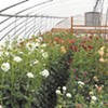 Blooming Health