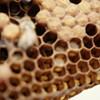HoneyLove Urban Beekeepers