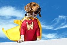 c329b18d_heroic-dog.jpg