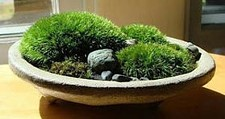 55cc0a20_zen-moss-bowl-300x159.jpg