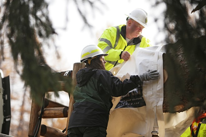 U.S. Forest Service employee Cally Davidson, left, and Pend Oreille County Public Works employee Bernie Nelson place a bag on the base of the tree. - YOUNG KWAK