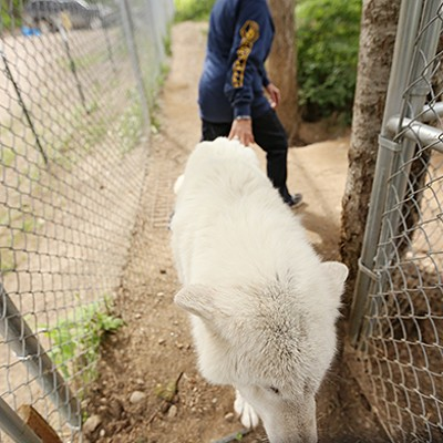 PHOTOS: Wolf People Center