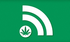 WEED WEDNESDAY: Pullman's new store and a cute animal threatened by pot farming