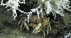 noaa-crabthing.png