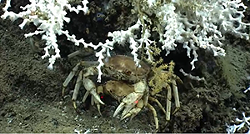 noaa-crabthing.png