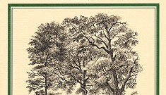 Book Review: <i>The Bat-Poet</i>