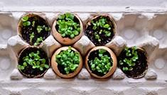 Eggshell Flowerpots