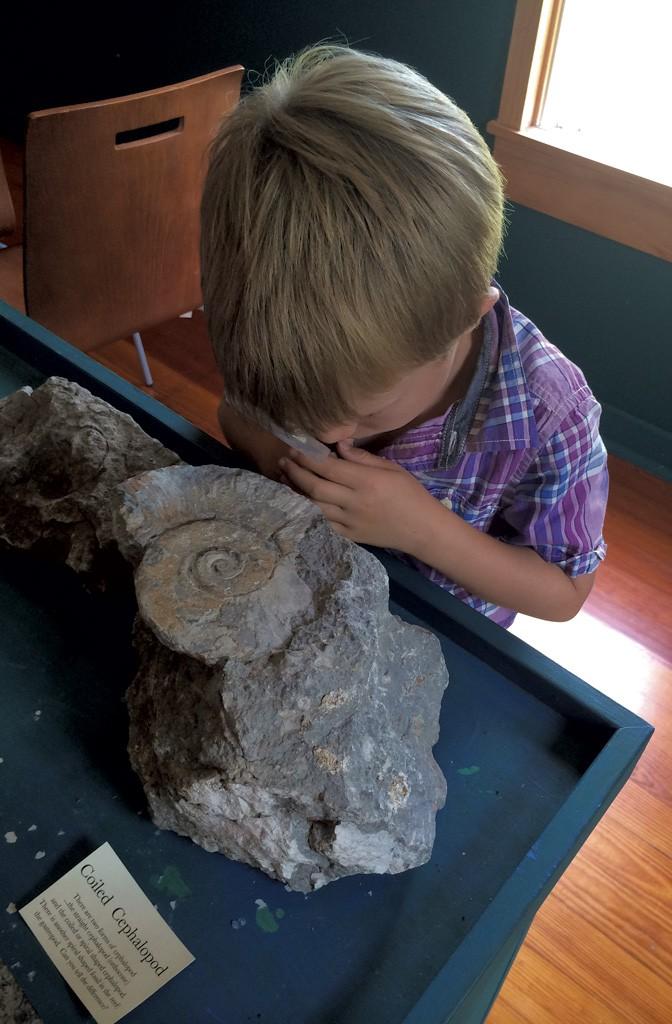 Goodsell Ridge Fossil Preserve