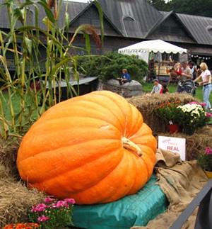 9-25_shelburne_farms_harvest_festival.jpg