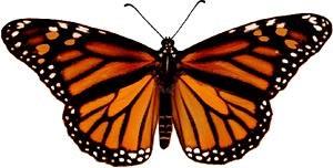 monarchf.jpg