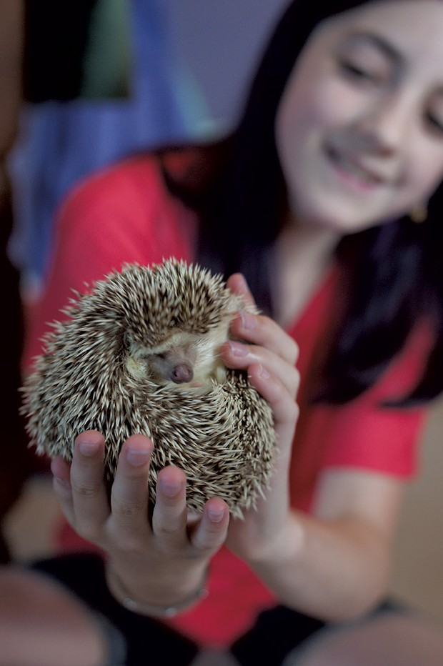 Owner: Livia Ball, 12; Pet: Bilbo the hedgehog, nearly 1 year old