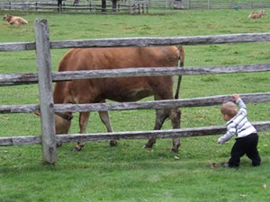 boy_cow.jpg