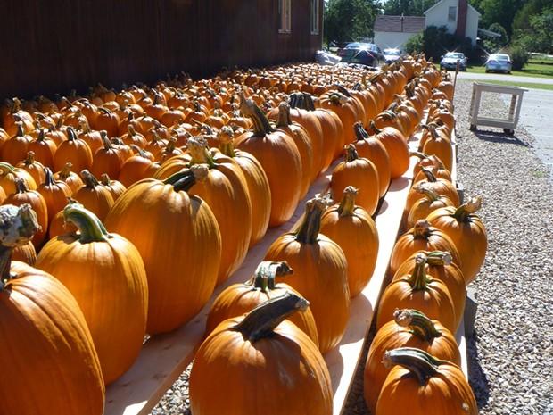 Pumpkins at Sam Mazza's