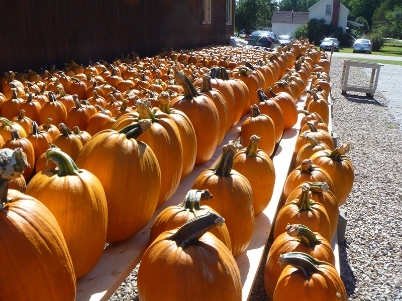 Pumpkins at Sam Mazza's