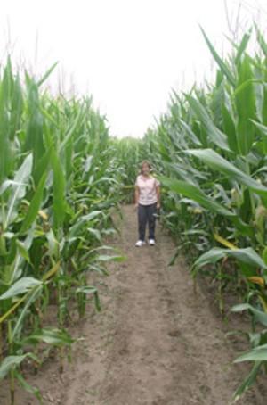 corn-maze_size.jpg