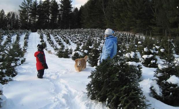 Tree hunting in Middlesex - MEADOW RIDGE FARM