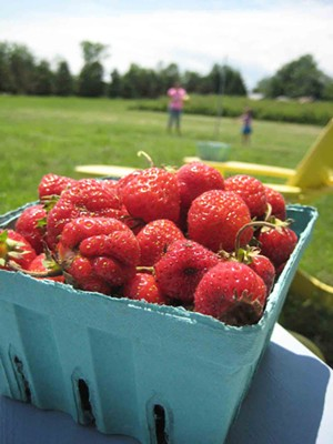Strawberries from the Charlotte Berry Farm. - SACHI LEITH